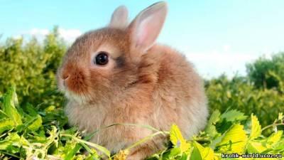Кролики декоративные купить можно в питомнике Долина Ветров.