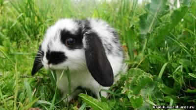 Перейти к объявлению ''Декоративные кролики 250 грн.  Предыдущее фото.
