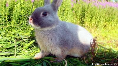 Фотографии Кролики декоративные после вакцинации.